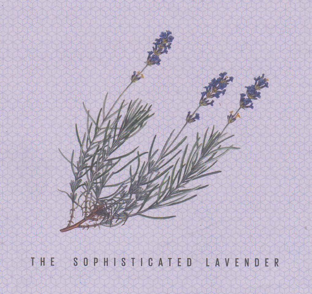 Cucumis Lavendel