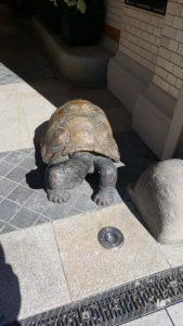 Tortue hamburg: Schildkröten-Skulptur