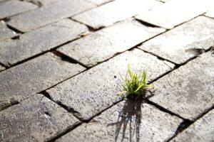 Nachhaltigkeit, Leben, Naturkräfte